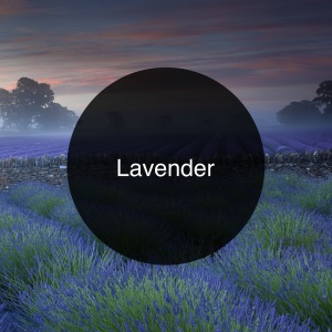The Candy Perfume Boy's Guide to Lavender