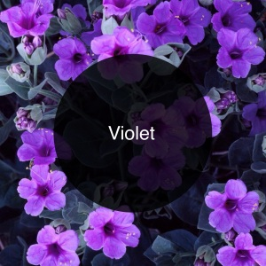 The Candy Perfume Boy's Guide to Violet