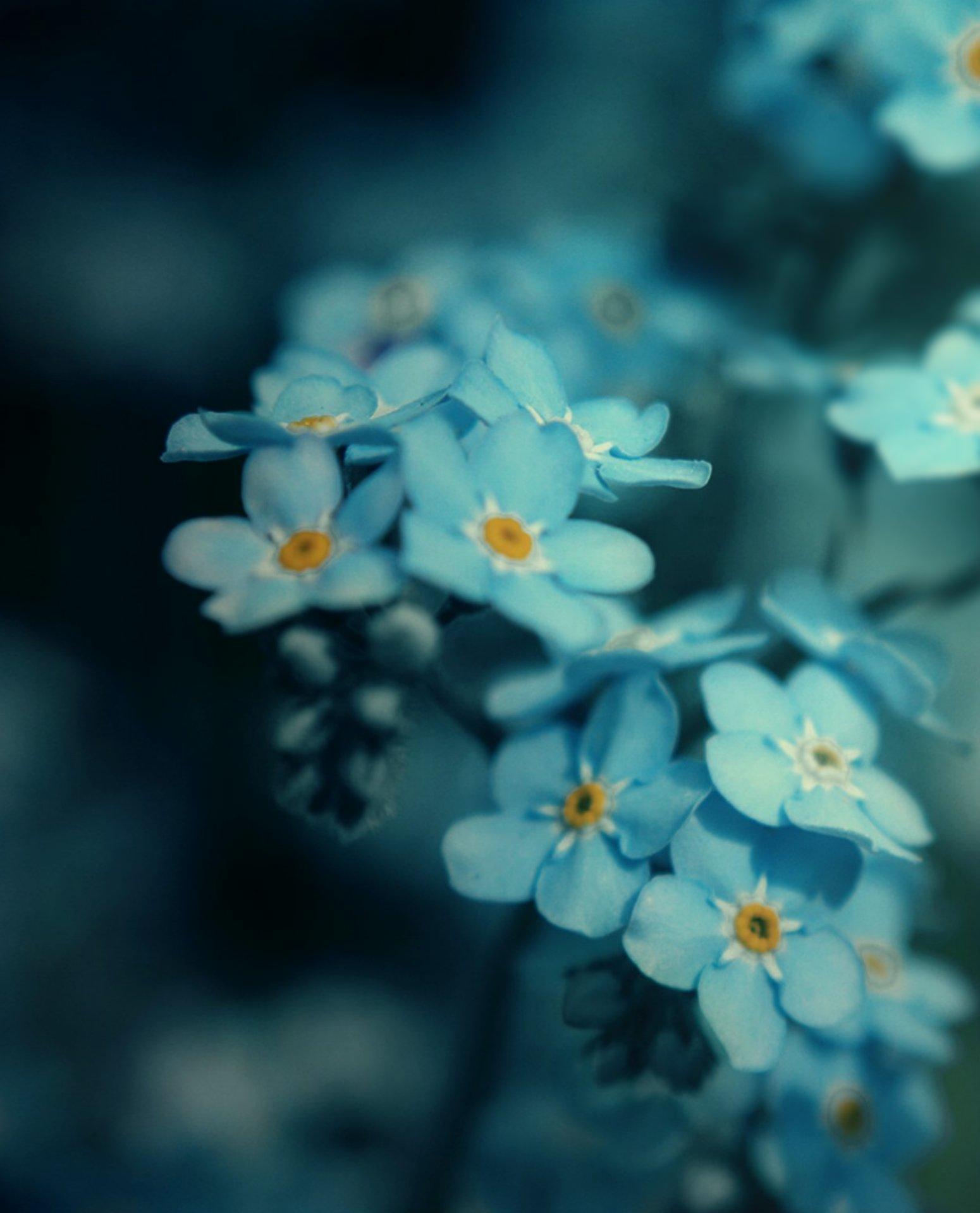 Frozen Flowers – Floral Fragrances for Winter