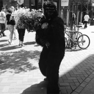 You Gotta Love That Gorilla
