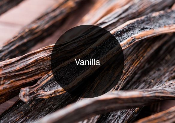The Candy Perfume Boy's Guide to Vanilla