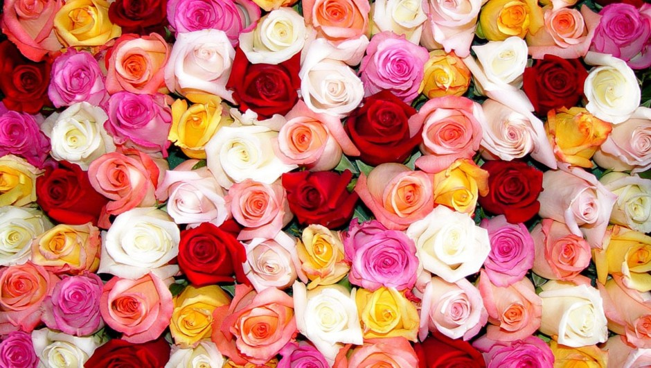 A Multitude of Multicoloured Roses