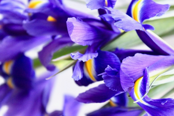 Inside Iris - An Olfactory Deconstruction