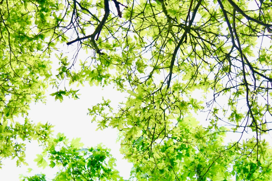 Dreaming Under The Canopy